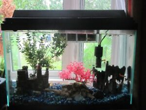 fish tank 20 gal with guppies and accessories