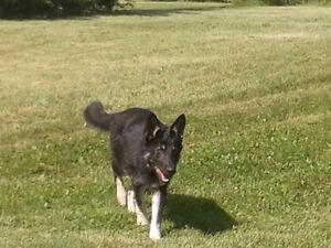 Dog Boarding and Dog Daycare Available Cambridge Kitchener Area image 3