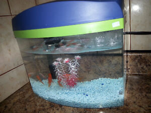 fish tanks with all accesory and fish included
