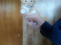 10 Free Kittens Can make arrangements for lethbridge delivery