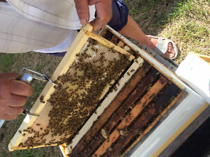 NUCS Bees for sale spring 2017
