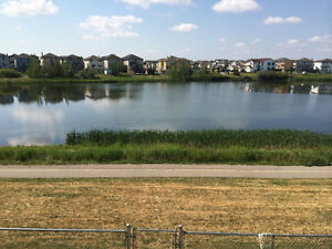 Spacious 2 Bedroom NE Lakeside Walkout Basement Suite  For Rent!