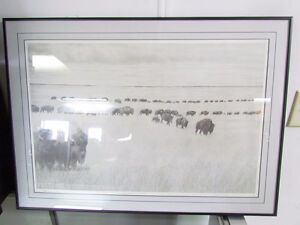 The Herd, Native to this Land - Local Artist!