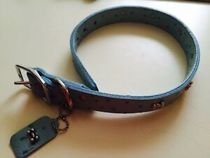 Brand new dog collars from pet value