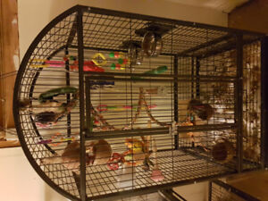 Sun conure with cage!