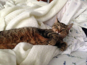MISSING TABBY - Portage/Valley Way Area