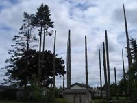 ►CHEAP TREE REMOVAL - LOOK HERE FIRST!