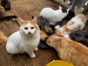 Kittens Need Warm Homes!