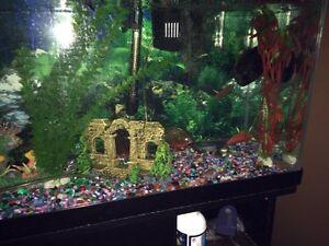 Aquarium with piranhas 3