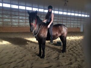 30,60 and 90 day horse training