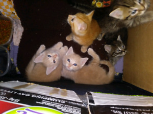 Kittens free to a loving family for their forever hom