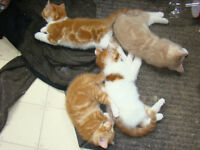 Kittens looking for their furever home *FREE*