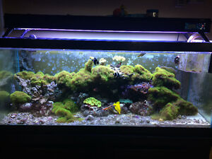 Reduced to sell! 70gal salt water aquarium complete set up