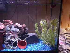 29 gallon tall fish aquarium comes with everything.