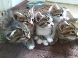 3 male kittens