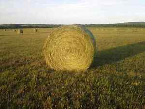 Hay bales forsale (horse equality)