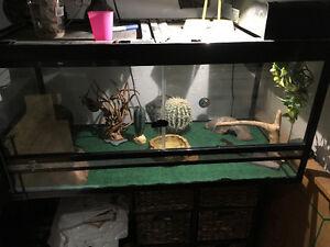 Vivarium- gecko