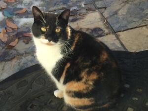 Found: Female Calico Cat