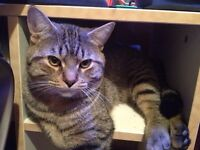 Lost cat in bridlewood kanata!
