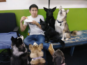 Dog Daycare attendant wanted Part Time