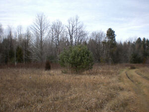New Listing - Private Wooded Rural Lot close to trout Stream Oakville / Halton Region Toronto (GTA) image 5