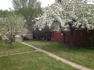 room in shared house for rent - available immediately Edmonton Edmonton Area image 2