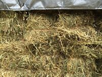 Small square Bales Green feed for sale-5$/per bale