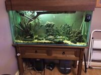 Fish tank 4ft complete with all accessories Manchester