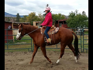 Flashy mare project