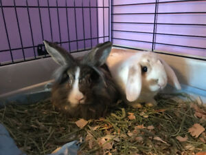 All included Lovable bunnies looking for a home