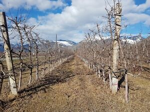 Farm for sale in Keremeos