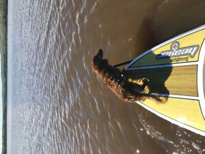 Stand-up Paddle Board (2 available)