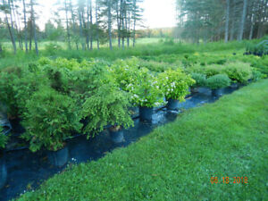 Potted shrubs and trees