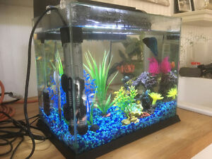 Fish, complete with tank, heater and accessories