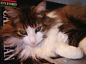 Loving cat looking for a good home-URGENT-Chat à donner