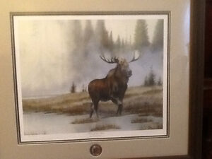 Into the mist ,moose picture