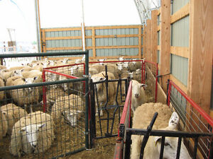 PROFESSIONAL SHEARING / CERTIFIED NEW ZEALAND SHEARER Cornwall Ontario image 3