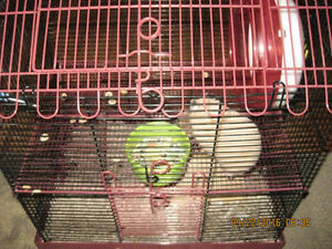FREE 6 month old female hamster with cage to good home
