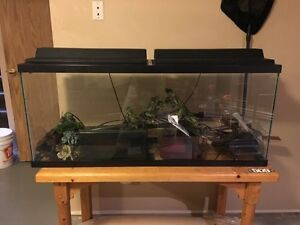 55 gallons fish tank