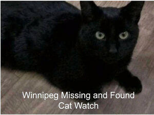 Lost Male Black (about year old) Cat @ Brooklands area