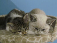 Temporary Homes Needed (cats & kittens)