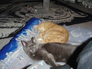 WASHAGO CAT SITTER/PET SITTER