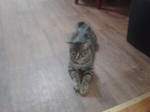 4 amazing cats need a home. Owner has short time to live