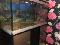 Good condition 180ltr fish tank and unit