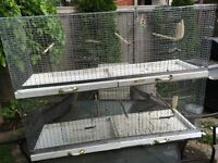 Cages and canaries for sale