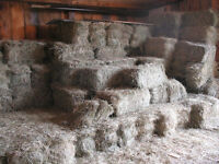 Small square Bales of good horse hay