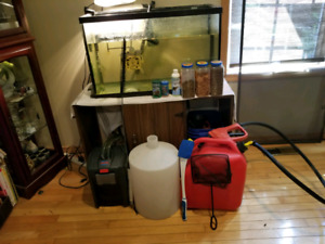 Turtle, 60 gallon tank, and everything else you will need.