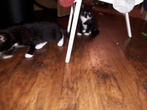 kittens 9.5 weeks