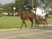 Driving Horse