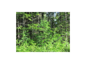 2 Lots on Niagara Road, Lower Coverdale